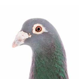 Send a pigeon to Punkt.